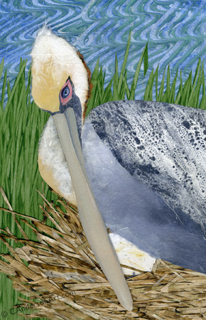 pelican nesting